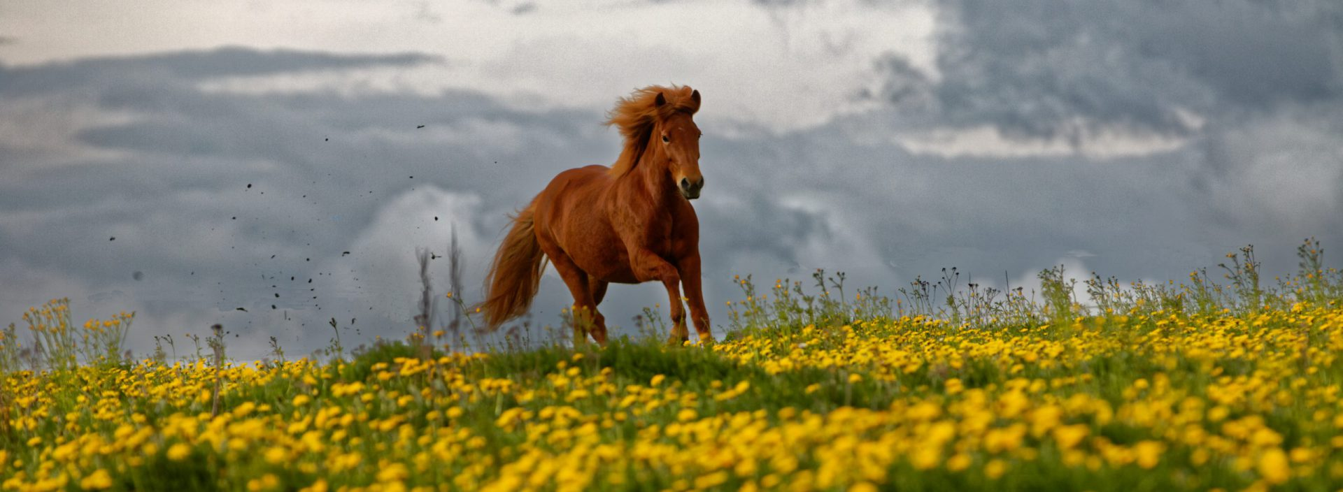 Islandpferde-Reitschule Enztal